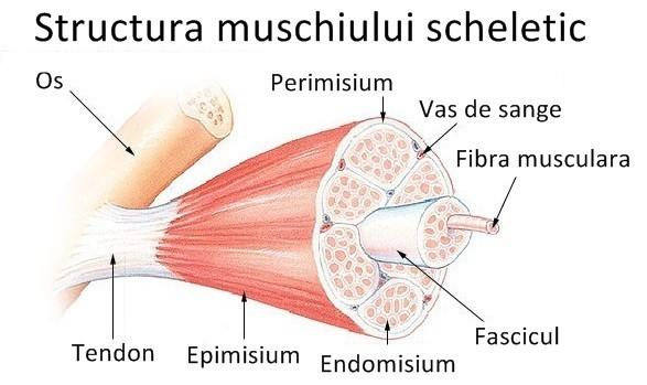 prevalența bolilor sistemului musculo-scheletic și a țesutului conjunctiv