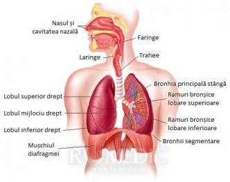 dureri intestinale inferioare spate ?i rinichi