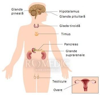 cancerul endocrin)