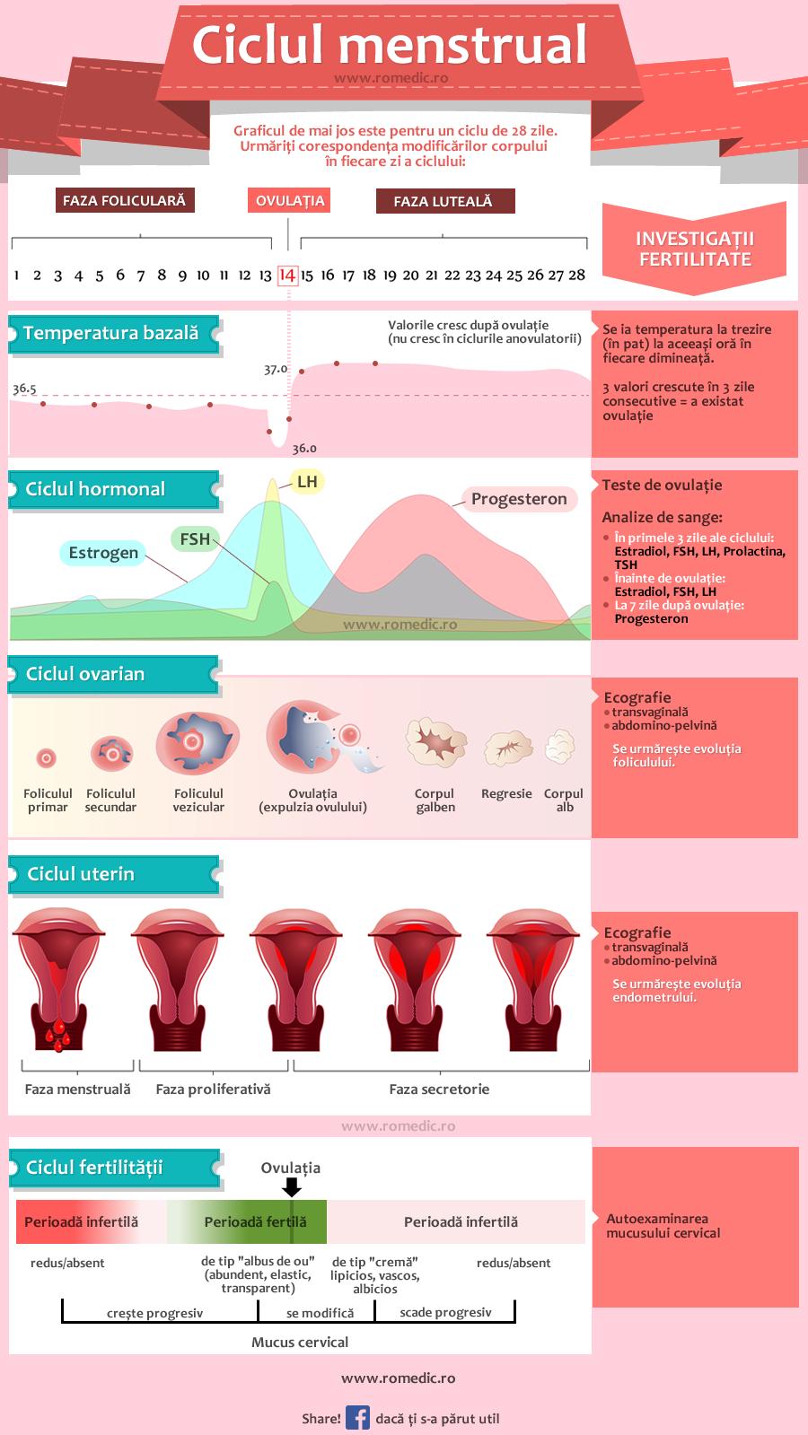 Schema etapelor ciclului menstrual