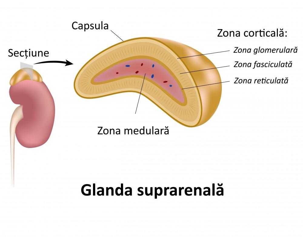 viziune în bolile glandelor suprarenale)