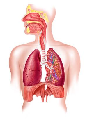 Simptome cancer mediastin, tumora mediastinala