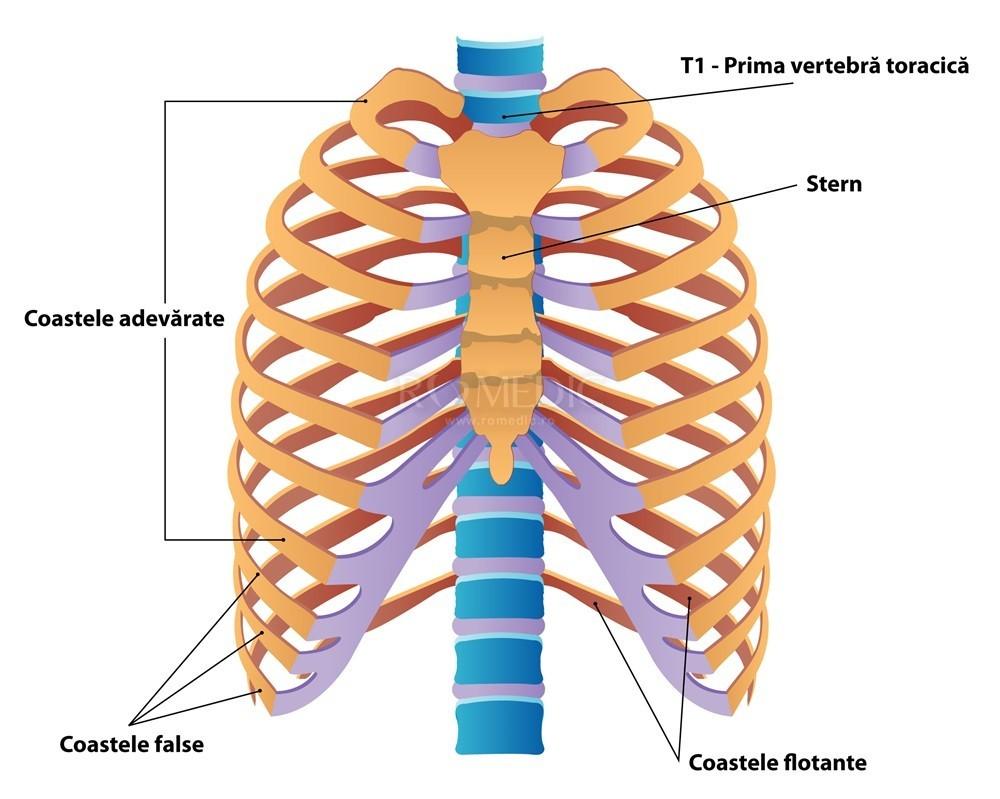 dureri articulare și de coaste