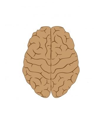 MIT: Când învățăm în creier se formează noi circumvoluțiuni