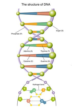 O nouă descoperire privind bazele genetice ale autismului