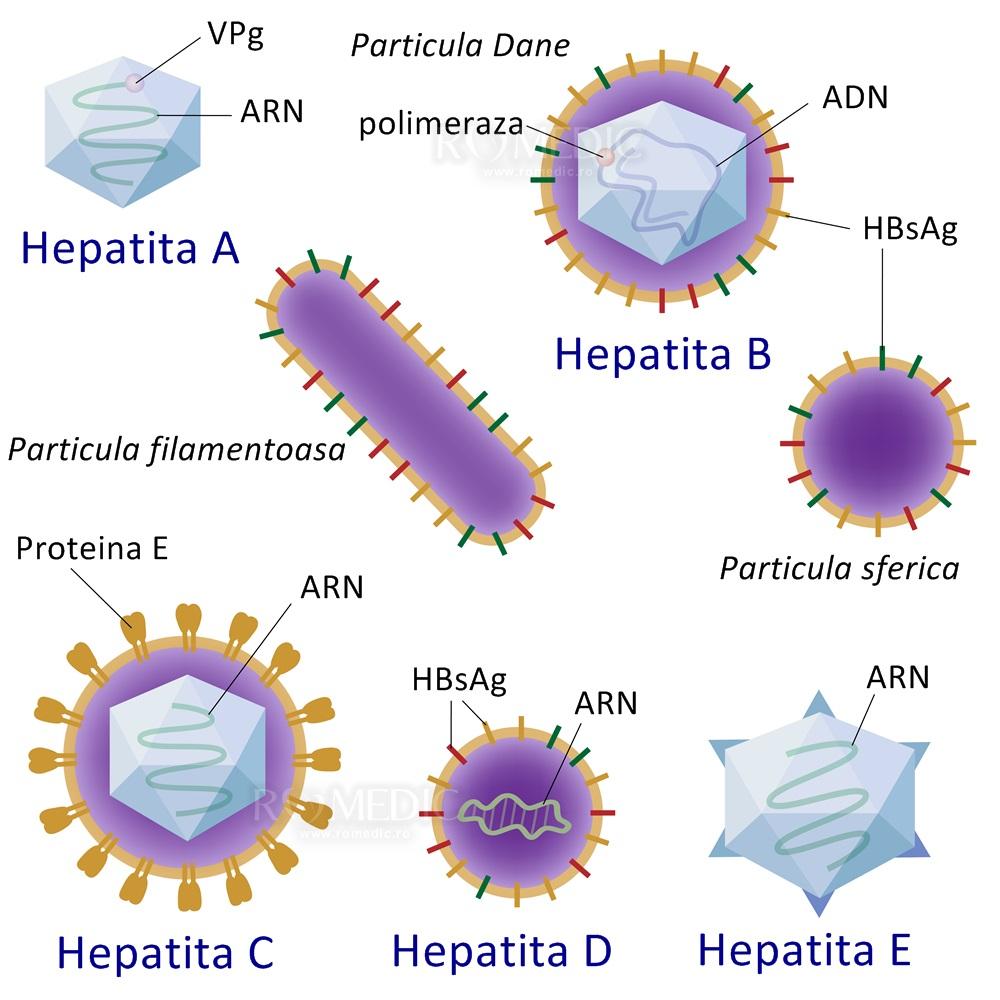 forum pentru dureri articulare hepatite