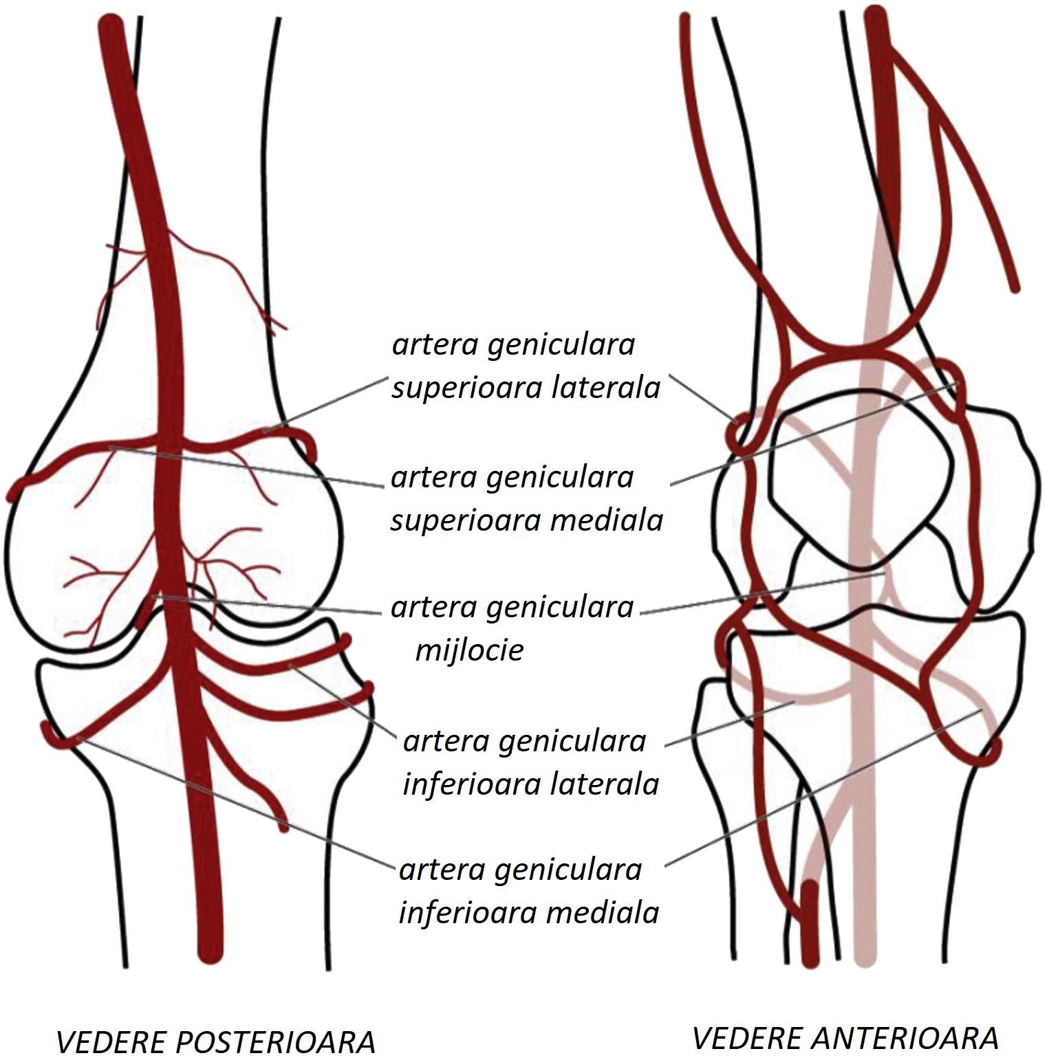 Tratament articular de ateroscleroză - cooperativadaciaunita.ro