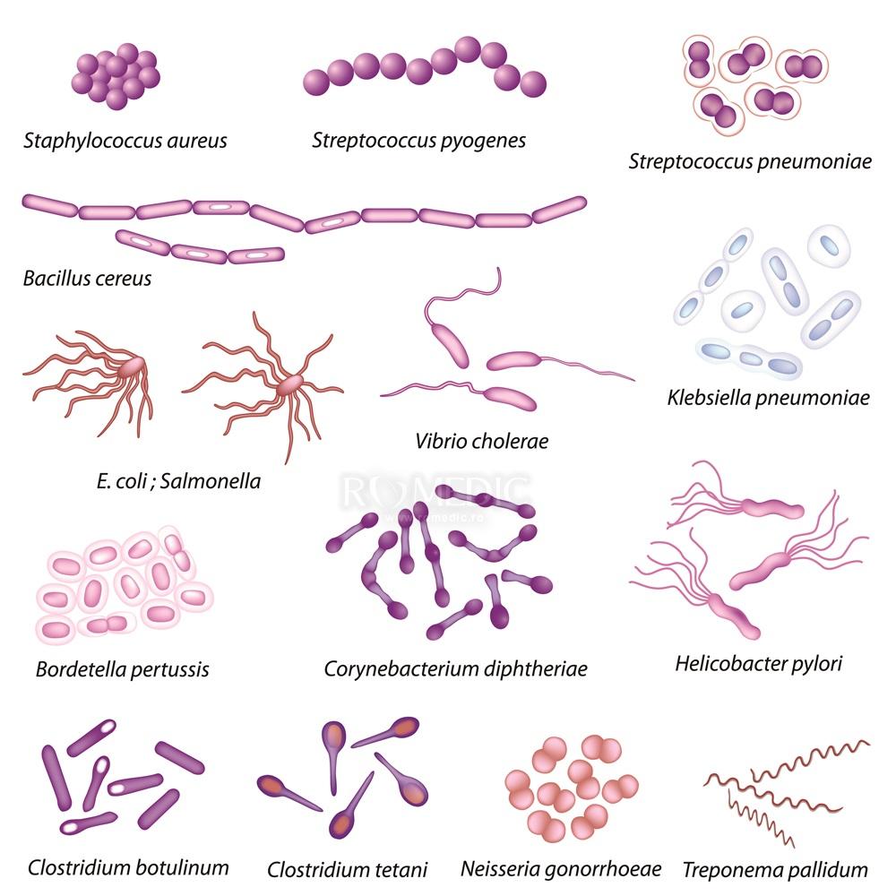 5 bacterii care te pot ucide | Boli şi tratamente, Sănătate | p5net.ro