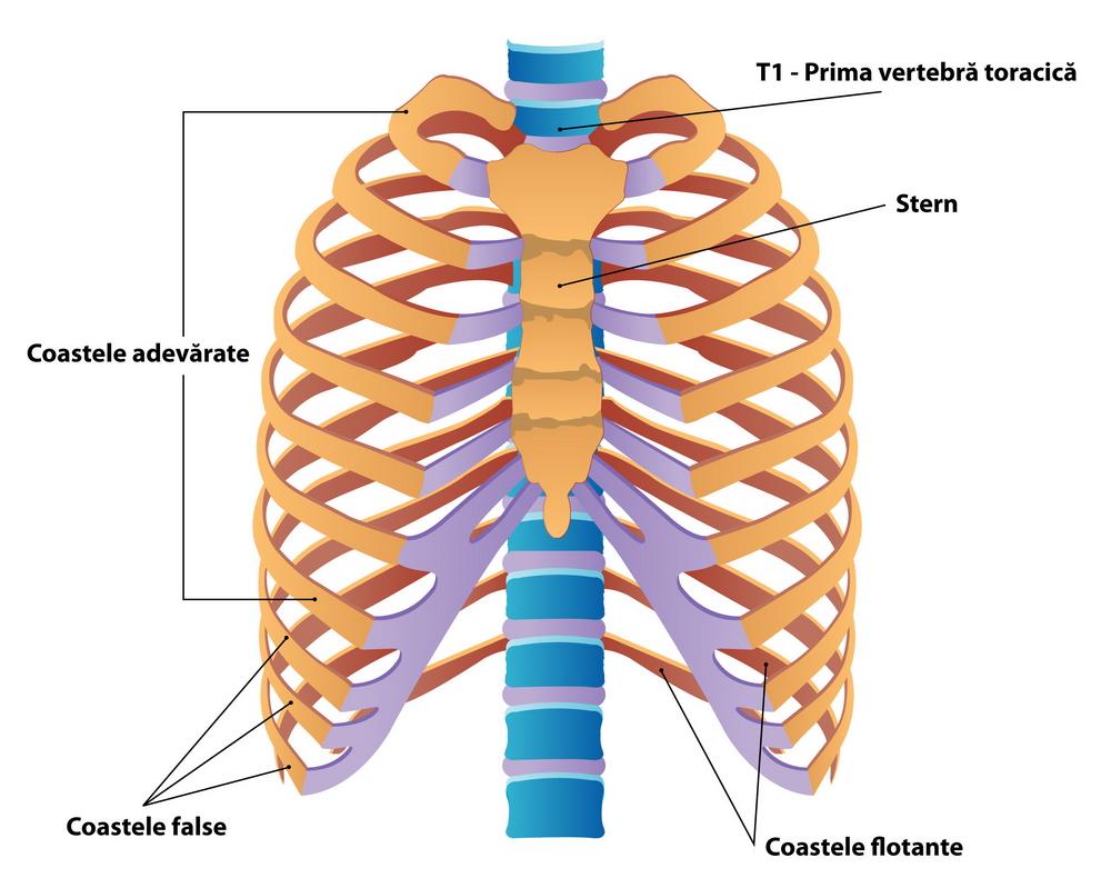 inflamația articulațiilor costale tratamentul artritei articulare la umăr