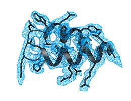 Imunitatea înnăscută este afectată prin inhibarea sintezei proteice de către SARS-CoV-2