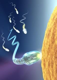 Fertilitatea si infertilitatea
